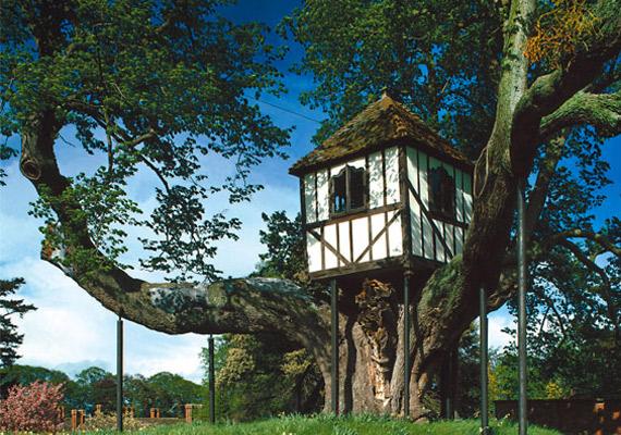 Casa del Árbol más antigua del mundo